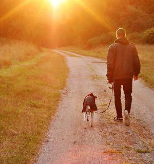 https://www.dogteam-leibnitz.at/wp-content/uploads/2021/01/Social-Walk-2-300x320.jpg