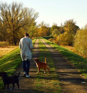 https://www.dogteam-leibnitz.at/wp-content/uploads/2021/01/Social-walk-300x320.jpg