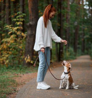 https://www.dogteam-leibnitz.at/wp-content/uploads/2021/01/Starter-Kurs_klein-300x320.jpg