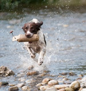 https://www.dogteam-leibnitz.at/wp-content/uploads/2021/02/fun-team-2-300x320.jpg