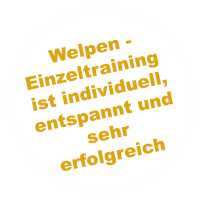 https://www.dogteam-leibnitz.at/wp-content/uploads/2021/02/socialwalk_sticker2-200x200.png